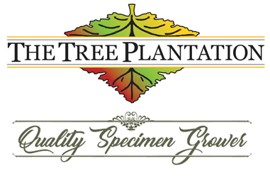 The Tree Plantation